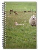 New Zealand Sheep Spiral Notebook