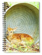 Newborn Fawn Finds Shelter In An Old Washtub Spiral Notebook