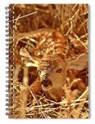 Newborn Fawn Spiral Notebook