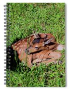 Newborn Red Deer Spiral Notebook