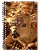 Newly Born Fawn Hiding In A Saskatchewan Field Spiral Notebook