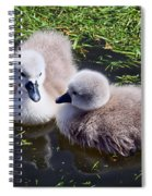 Newly Hatched Cygnets At Abbotsbury Spiral Notebook