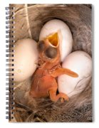 Newly Hatched Tree Swallow Spiral Notebook