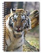Nice Kitty Spiral Notebook