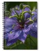 Nigella Damascena 3 Spiral Notebook