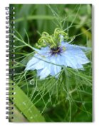 Nigella In Spring Rain Spiral Notebook