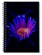Night Glow Spiral Notebook