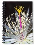 Night Time Celebration Spiral Notebook