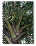 Niu Ola Hiki Coconut Palm Spiral Notebook