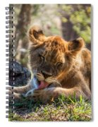 Lion Cub Lick Spiral Notebook