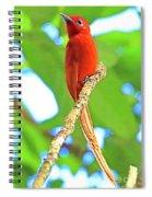 No Name Bird Spiral Notebook