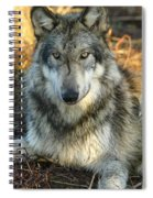 Noble Lupine Spiral Notebook