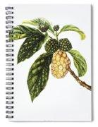 Noni Fruit Art Spiral Notebook