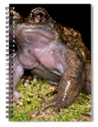 Noras Spiny Chest Frog Spiral Notebook