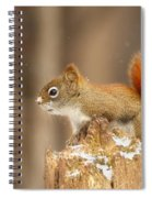 North American Red Squirrel In Winter Spiral Notebook