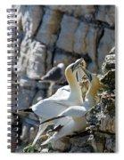 North Atlantic Gannets Spiral Notebook