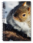 North Pond Squirrel Spiral Notebook