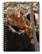 North Seymour Island Iguana In The Galapagos Islands Spiral Notebook