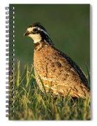 Northern Bobwhite Spiral Notebook