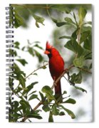 Northern Cardinal - In The Wind Spiral Notebook