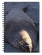 Northern Elephant Seal Spiral Notebook