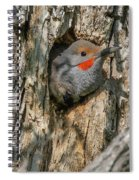 Northern Flicker Pokes His Head Out Spiral Notebook