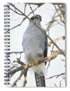Northern Goshawk Spiral Notebook