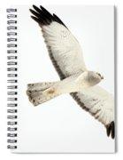 Northern Harrier Hawk, Yukon Spiral Notebook