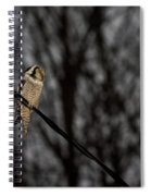 Northern Hawk-owl 22 Spiral Notebook