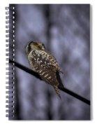 Northern Hawk-owl 6 Spiral Notebook
