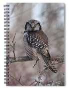 Northern Hawk Owl 9470 Spiral Notebook