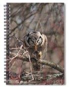 Northern Hawk Owl Having Lunch 9416 Spiral Notebook
