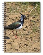 Northern Lapwing Spiral Notebook