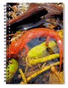 Northern Red Brook Spiral Notebook