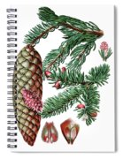 Norway Spruce, Pinus Abies Spiral Notebook