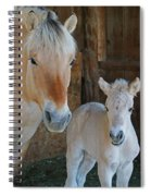 Norwegian Fjord Horse And Colt 1 Spiral Notebook