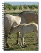 Norwegian Fjord Horse And Colt Spiral Notebook