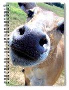 Nosey Cow Spiral Notebook