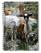 Nosy Sheep Spiral Notebook