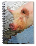 Not A Piglet Anymore Spiral Notebook