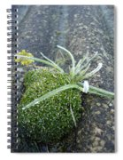 Not Quite A Roof Garden Spiral Notebook