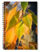 November Colors Spiral Notebook