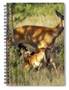 Nursing Fawn Spiral Notebook