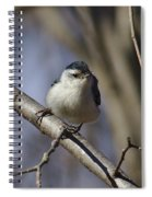 Nuthatch On Perch Spiral Notebook