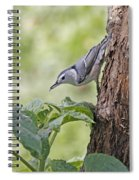Nuthatch On The Move Spiral Notebook