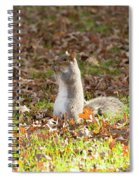 Nuts For Fall Spiral Notebook