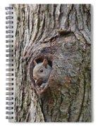 Nutty Squirrel Surprise  Spiral Notebook