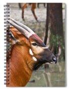 Nyala At The Watering Hole Spiral Notebook