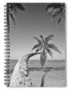 Oahu Palms Spiral Notebook