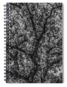 Oak Abstract Spiral Notebook